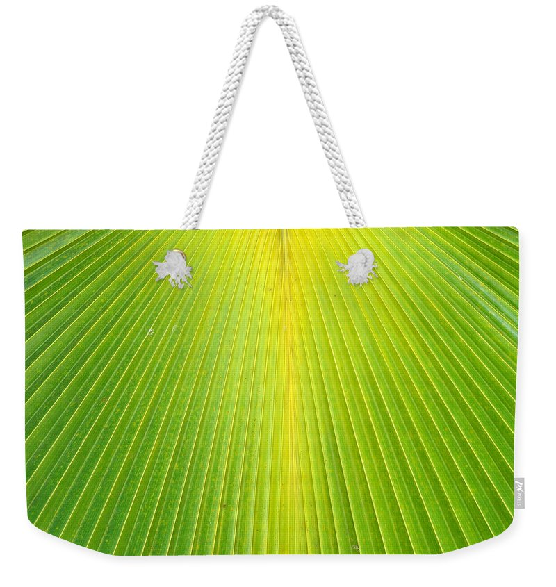 Palm Weekender Tote Bag featuring the photograph Molokai Palm Fan by Robert Meyers-Lussier