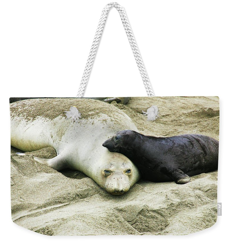 Elephant Seal Weekender Tote Bag featuring the photograph Mom and Pup by Anthony Jones