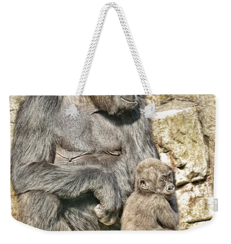 Jim Fitzpatrick Weekender Tote Bag featuring the photograph Momma And Baby Gorilla by Jim Fitzpatrick