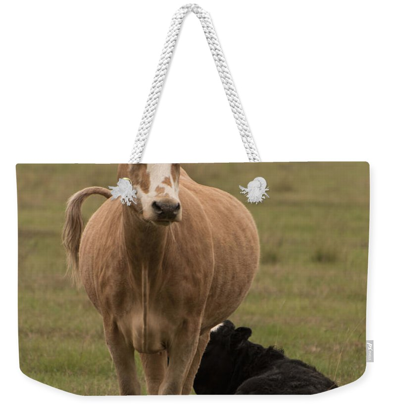 Cow Weekender Tote Bag featuring the photograph Momma Cow by James Hennis