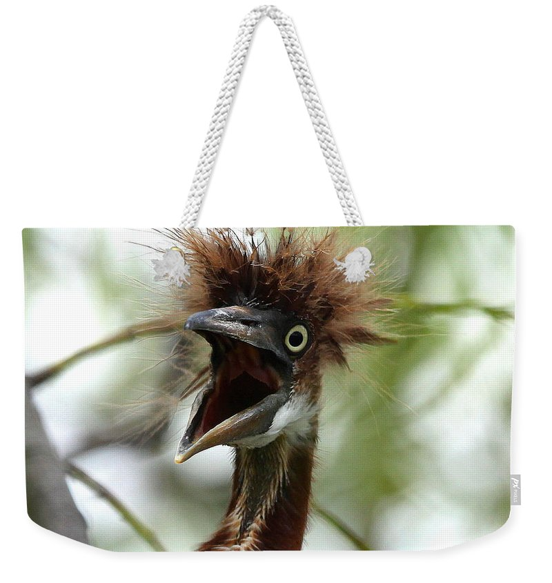 Immature Tri-colored Heron Weekender Tote Bag featuring the photograph Momma I Am Hungry by Barbara Bowen