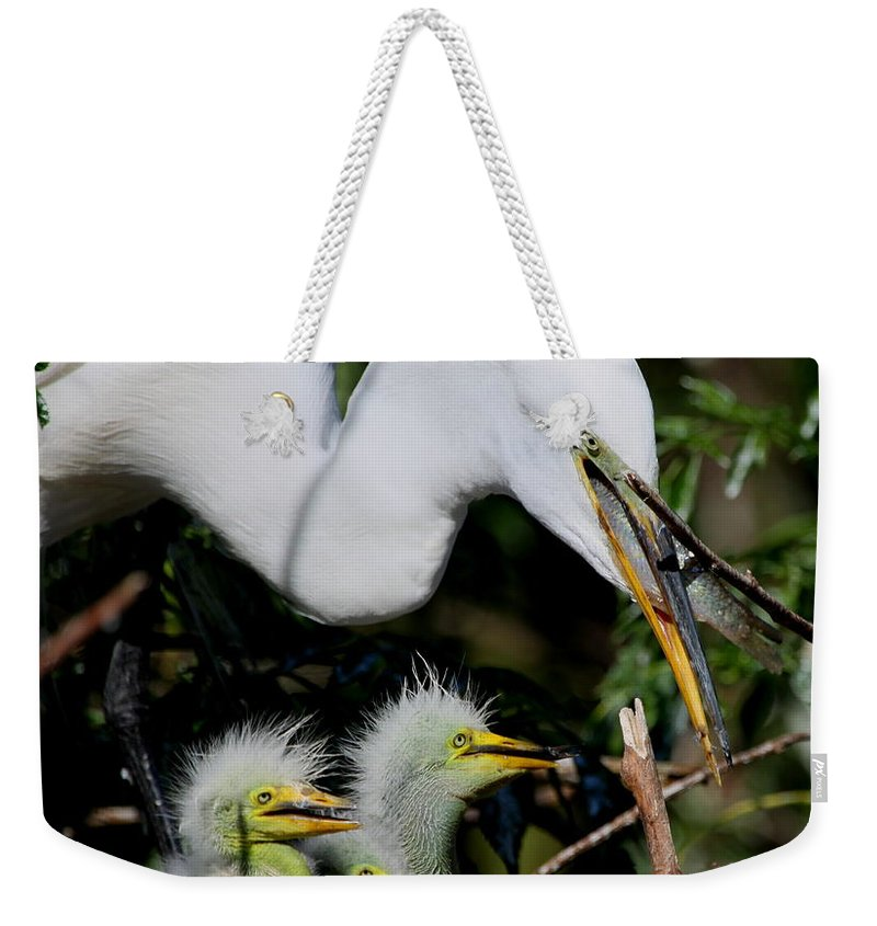 Great White Egret Weekender Tote Bag featuring the photograph Momma Took Our Food by Barbara Bowen