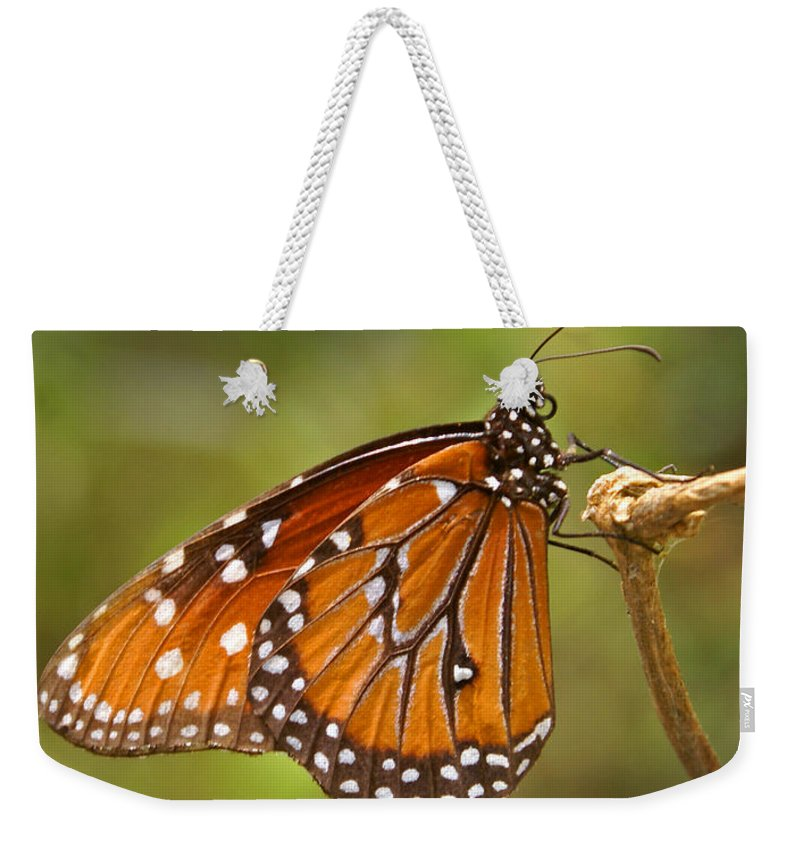 Monarch Weekender Tote Bag featuring the photograph Monarch Butterfly by Heather Coen