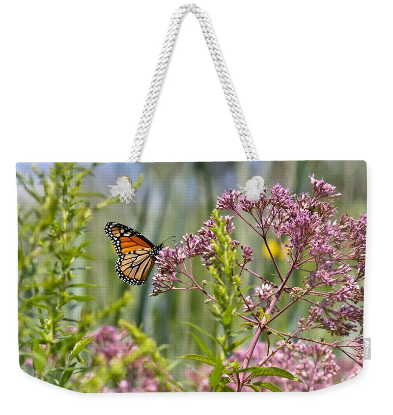 Monarch Butterfly Weekender Tote Bag featuring the photograph Monarch Butterfly In Joe Pye Weed by Kerri Farley