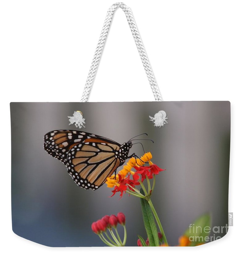 Butterfly Weekender Tote Bag featuring the photograph Monarch Butterfly On Milkweed by Randy Matthews