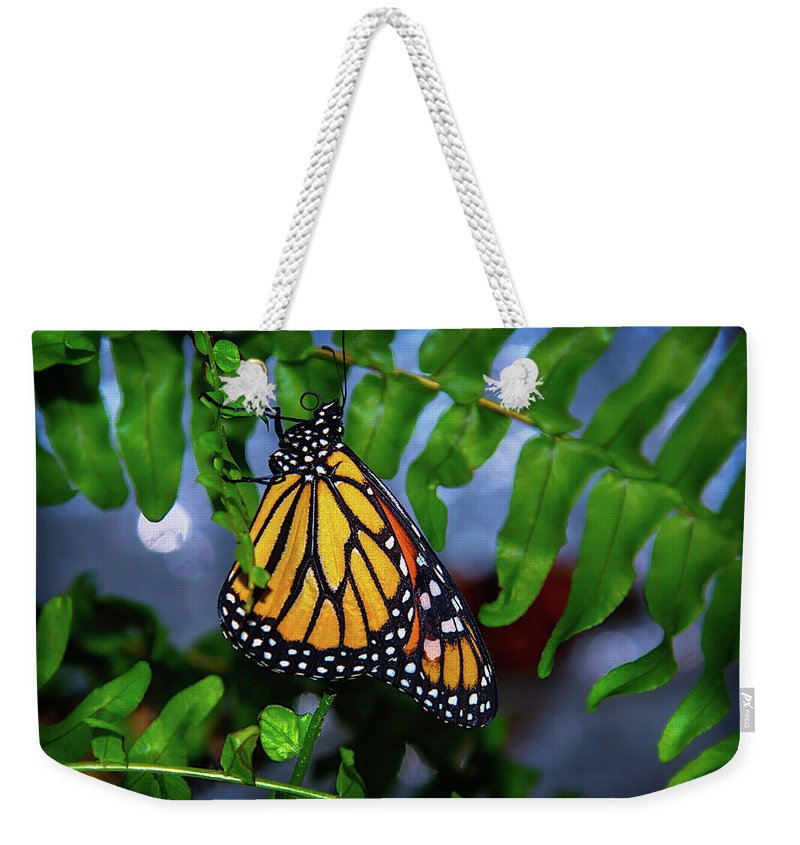 Hanging Weekender Tote Bag featuring the photograph Monarch Feeding by Garry Gay