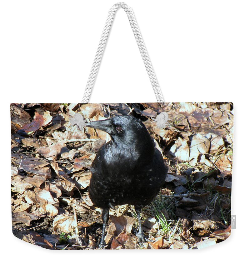 Crow Weekender Tote Bag featuring the photograph Monday January 23 2017 by Darrell MacIver