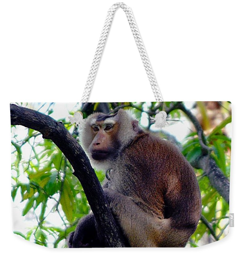 Monkey Weekender Tote Bag featuring the photograph Monkey In Tree by John Hughes