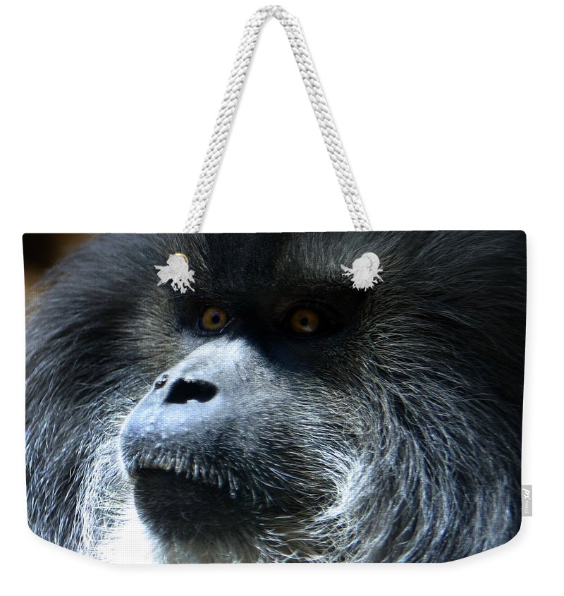 Monkey Weekender Tote Bag featuring the photograph Monkey Stare by Anthony Jones