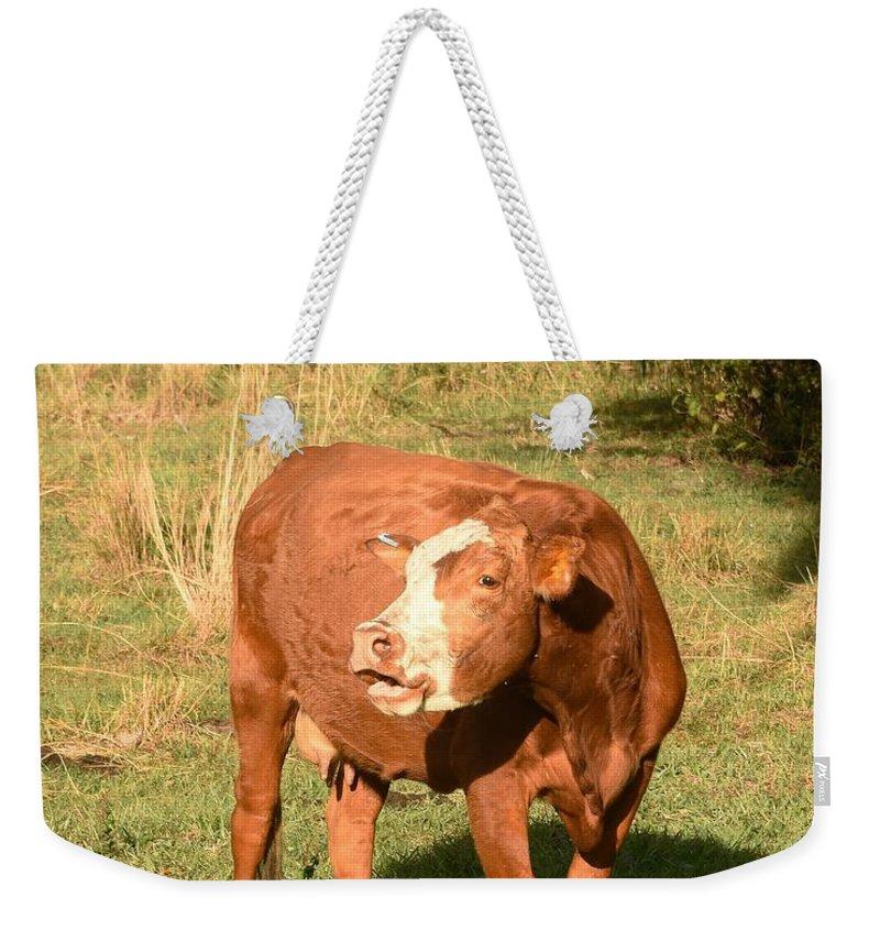 Moo Weekender Tote Bag featuring the photograph Moo by Lisa Renee Ludlum
