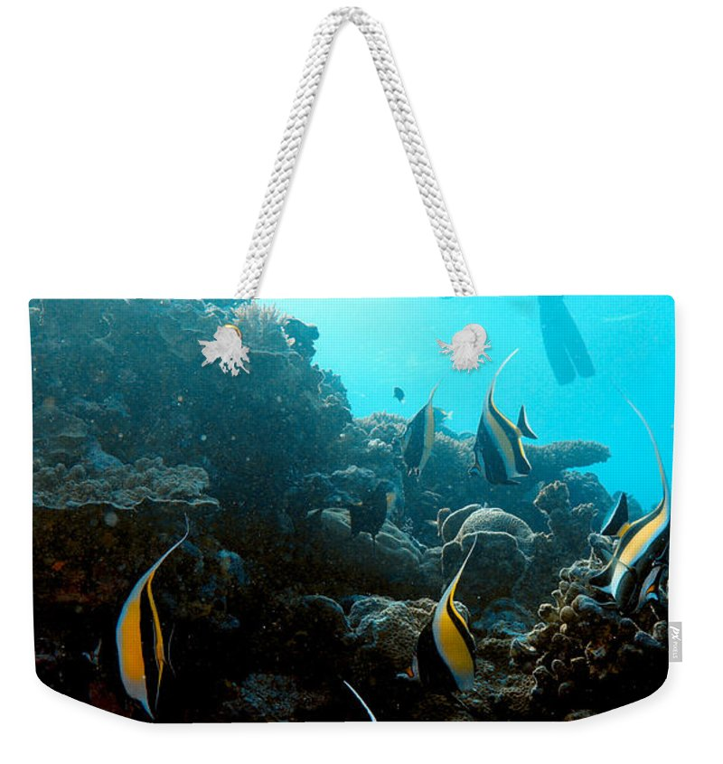 Moorish Idol Weekender Tote Bag featuring the photograph Parade by Mumbles and Grumbles