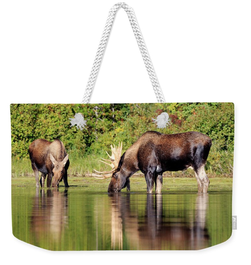 Glacier National Park Weekender Tote Bag featuring the photograph Moose Country by Jack Bell