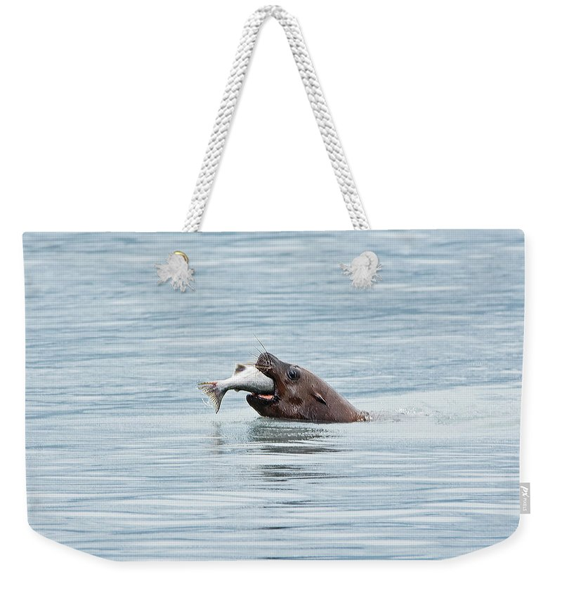 Sea Lion Weekender Tote Bag featuring the photograph More Than A Mouthful by Sherry McKellar