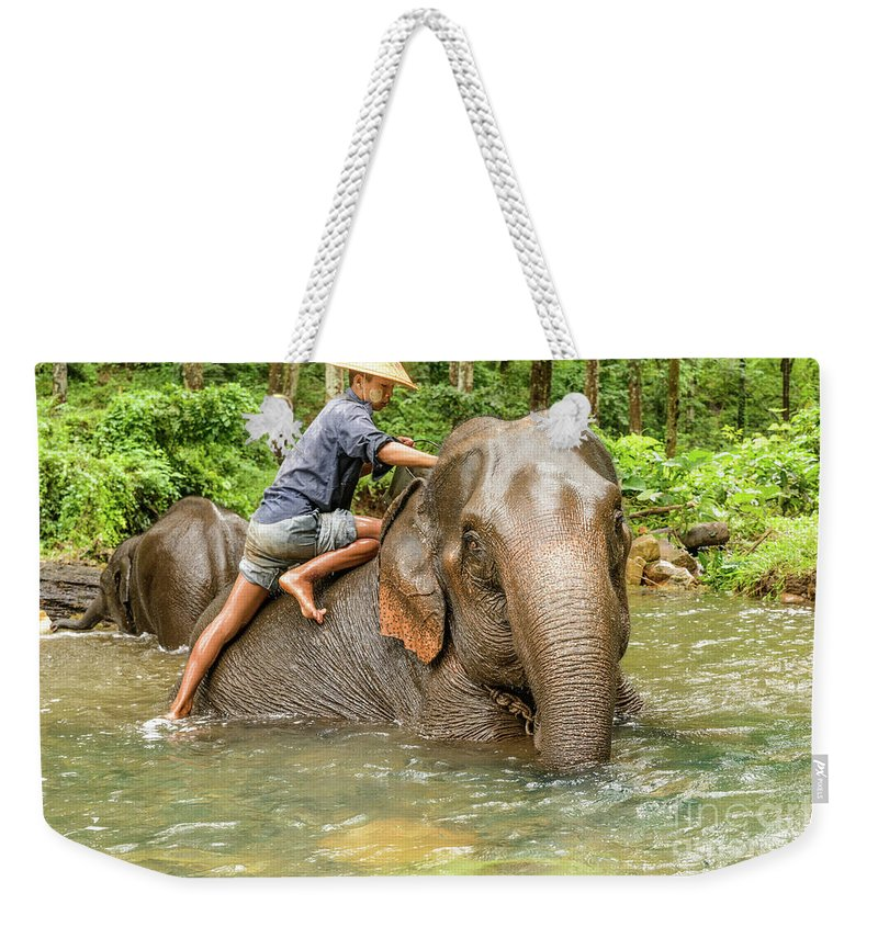 Elephant Weekender Tote Bag featuring the photograph Morning Ablutions 3 by Werner Padarin