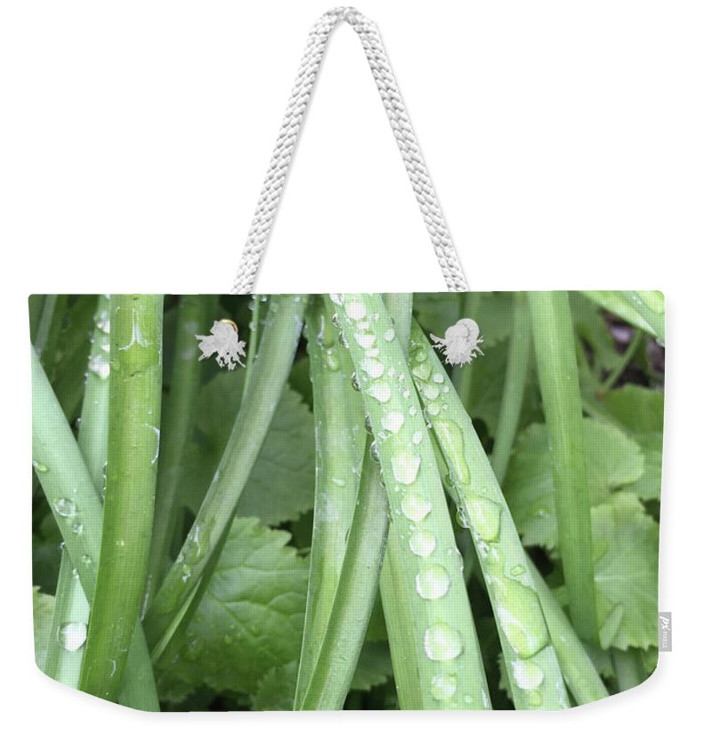 Water Weekender Tote Bag featuring the photograph Morning Dew Drops by Lara Ekdahl
