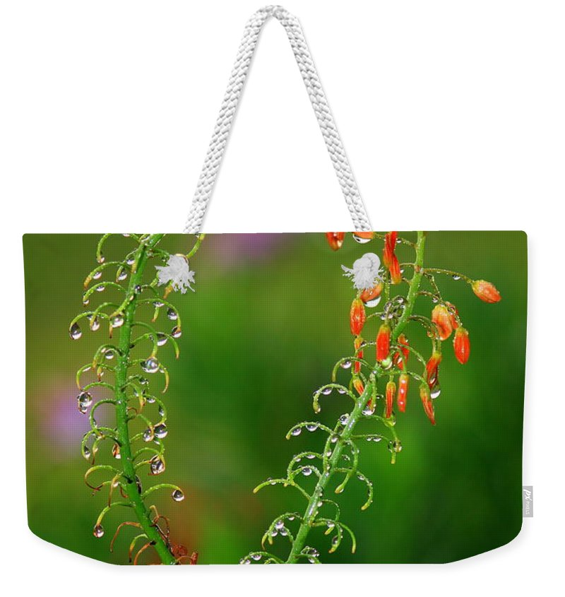Flowers Weekender Tote Bag featuring the photograph Morning Dew On Orange Flowers by Carol Groenen