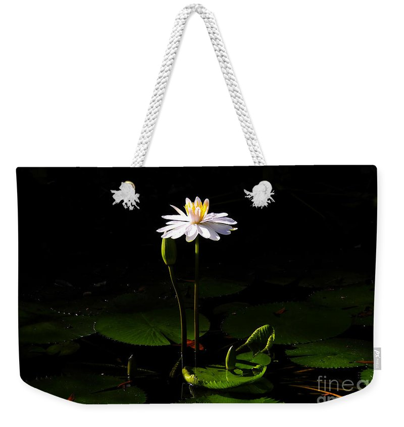 Morning Weekender Tote Bag featuring the photograph Morning Glory by David Lee Thompson