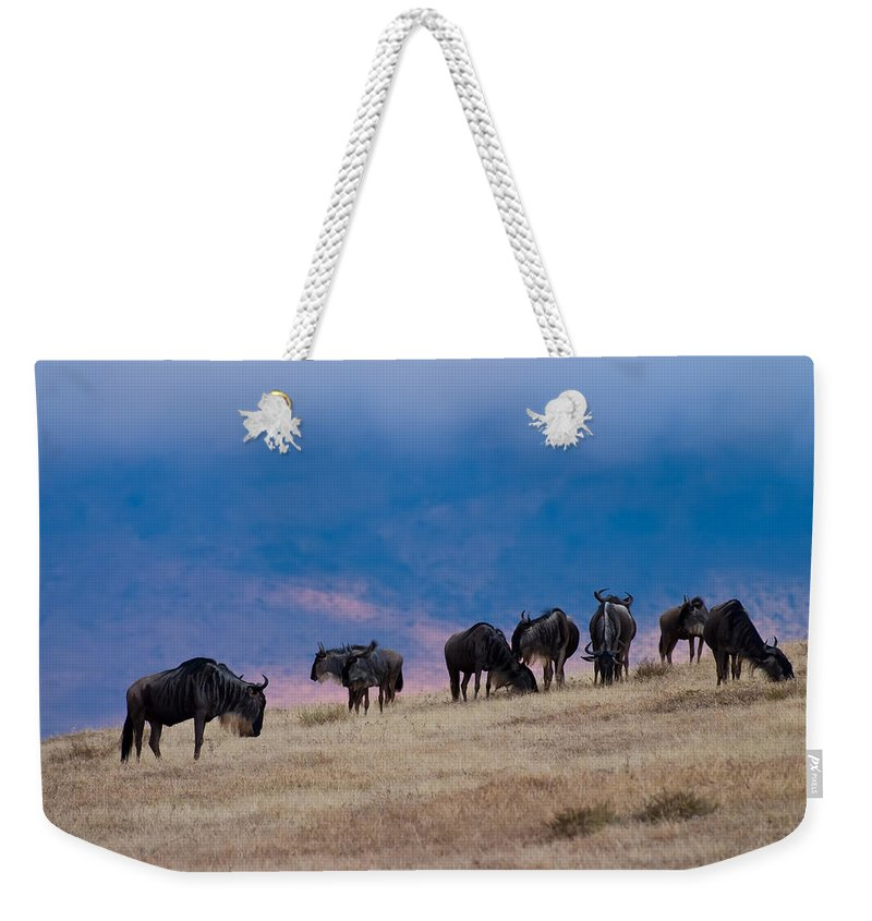 3scape Photos Weekender Tote Bag featuring the photograph Morning In Ngorongoro Crater by Adam Romanowicz