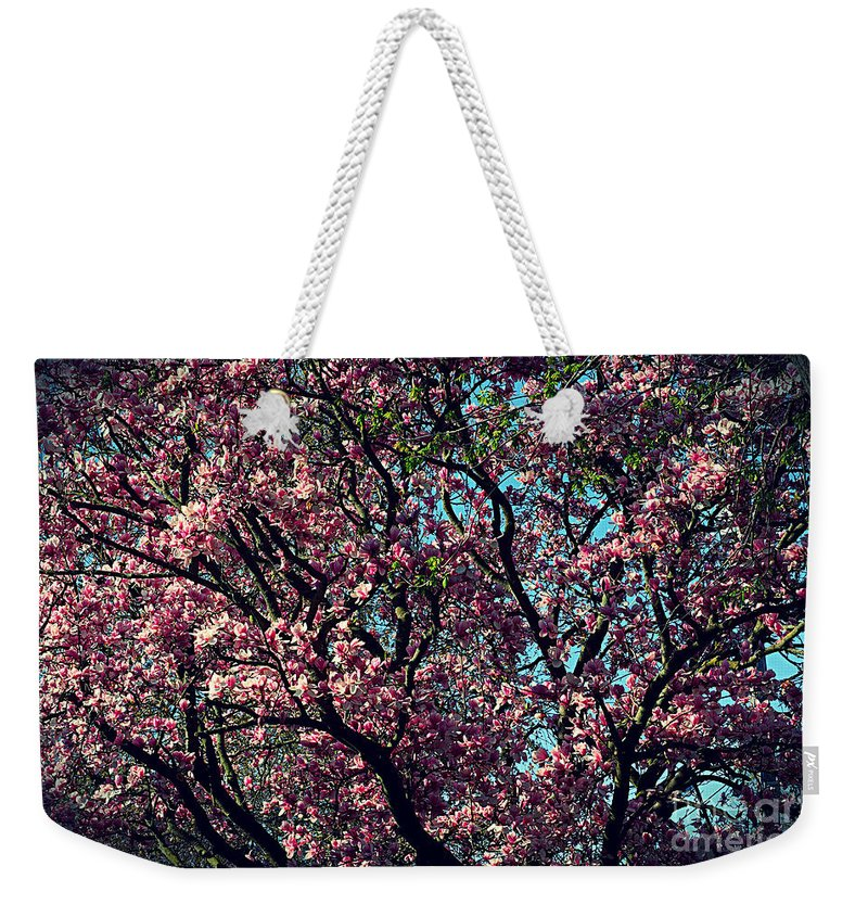 Frank J Casella Weekender Tote Bag featuring the photograph Morning Lit Magnolia by Frank J Casella