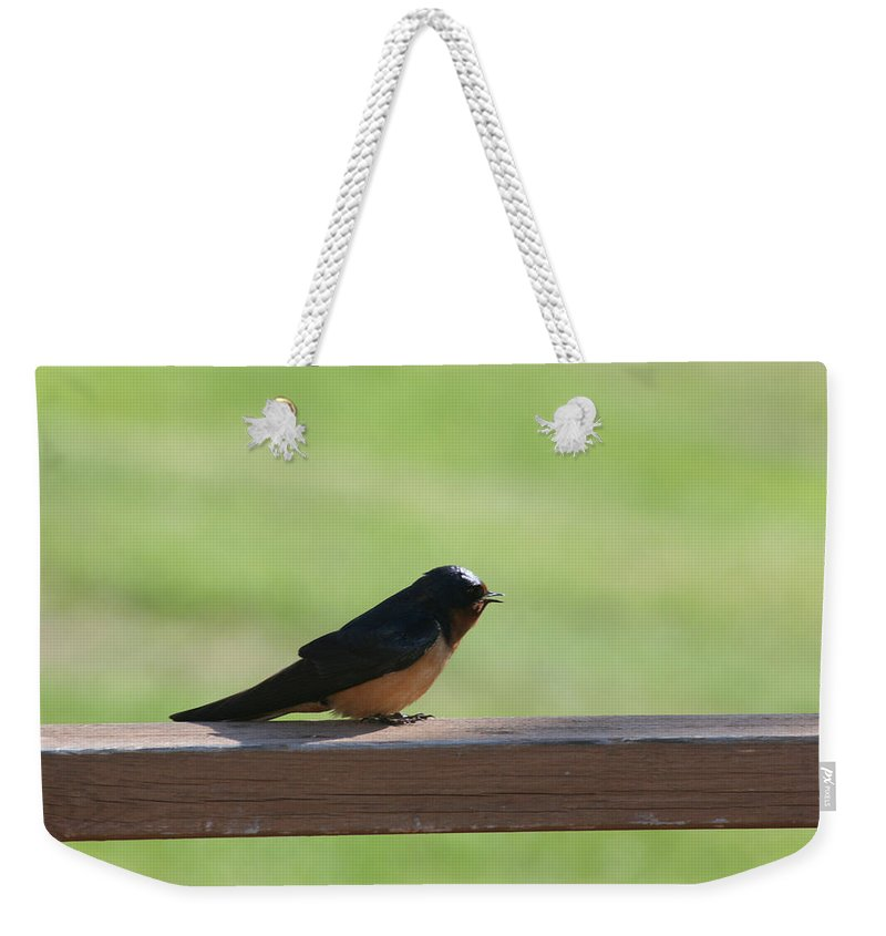 Barn Swallow Nesting Bird Singing Nature Wild Weekender Tote Bag featuring the photograph Morning Song by Andrea Lawrence