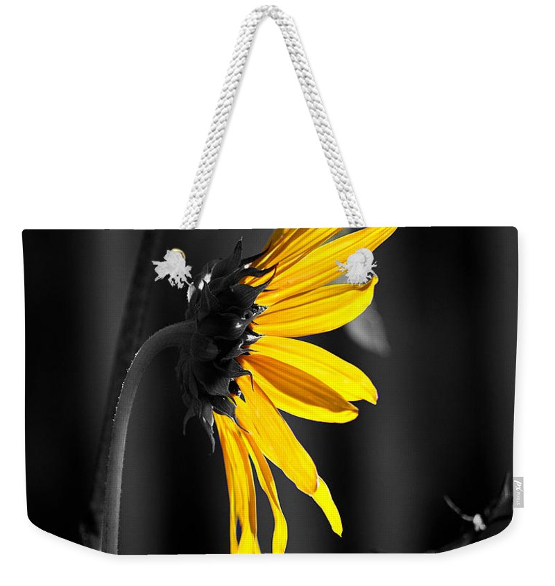 Clay Weekender Tote Bag featuring the photograph Morning Sun by Clayton Bruster