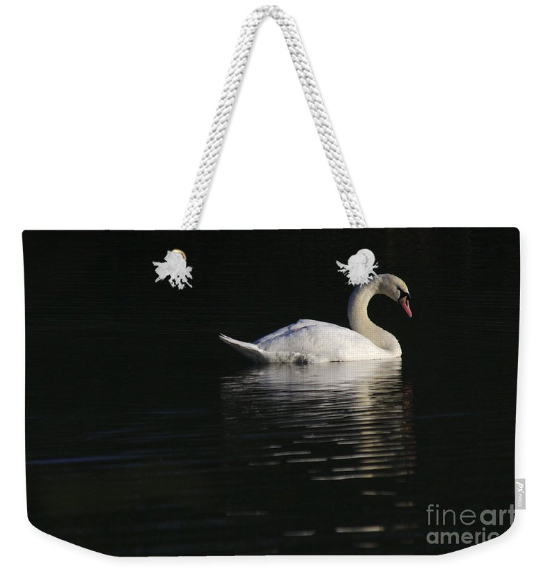 St James Lake Weekender Tote Bag featuring the photograph Morning Swan by Jeremy Hayden