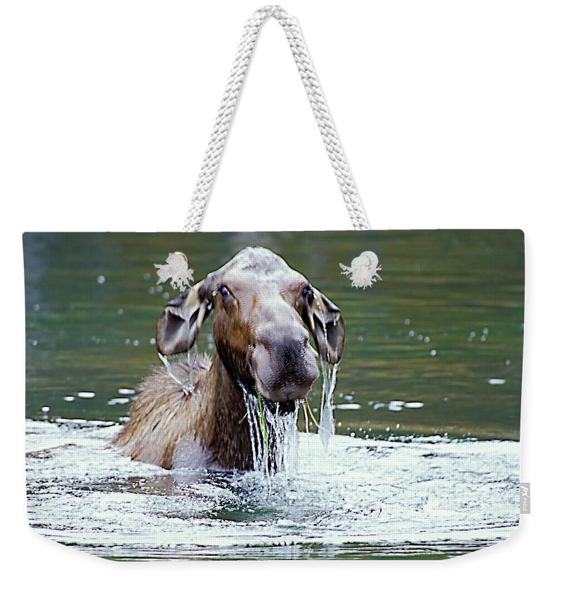 Moose Weekender Tote Bag featuring the photograph Mossy Moose by Gary Beeler