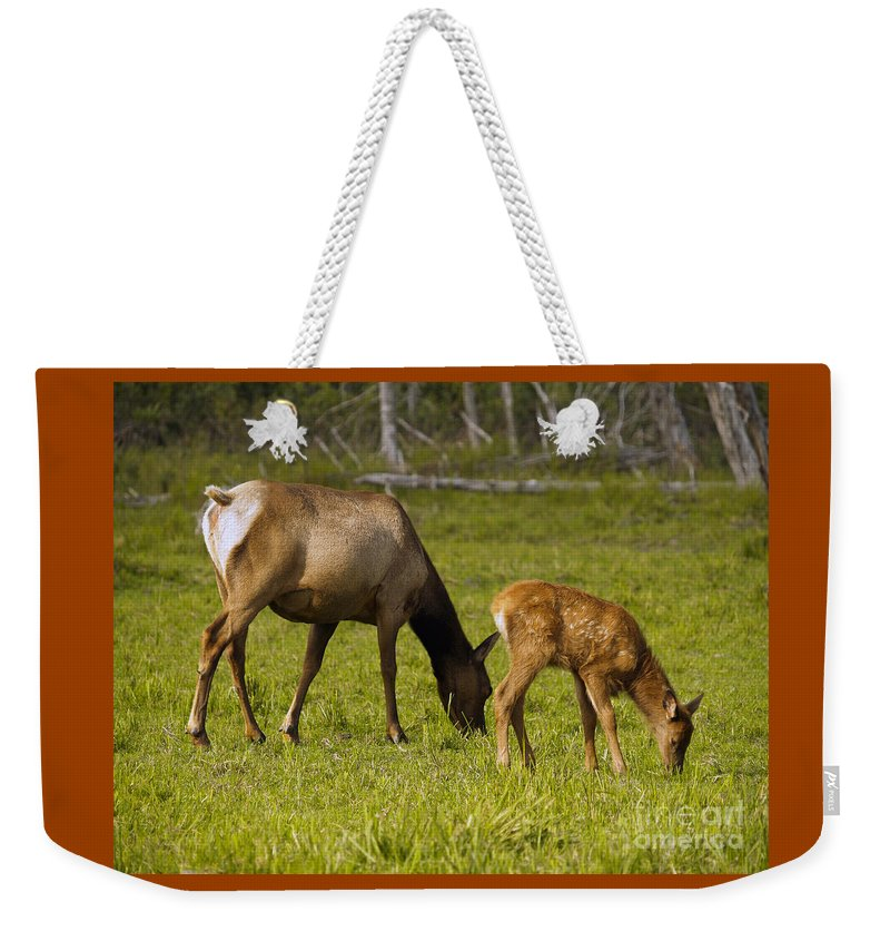 Elk Weekender Tote Bag featuring the photograph Mother Elk And Fawn by Denise McAllister