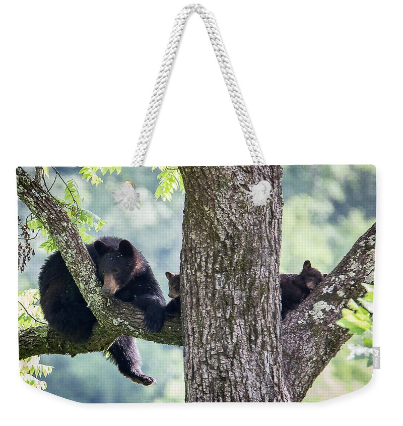 Adult Weekender Tote Bag featuring the photograph Mother Bear And Cubs by Benjamin King