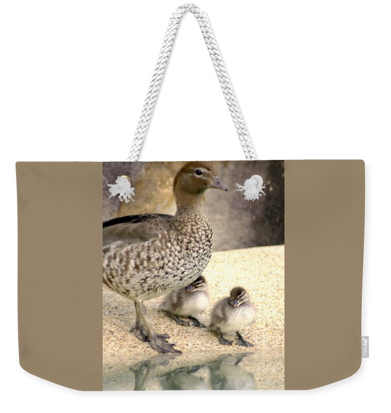Animals Weekender Tote Bag featuring the photograph Mother Of Twins by Holly Kempe