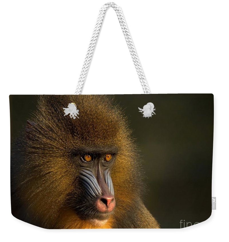 Wildlife Weekender Tote Bag featuring the photograph Mother's Finest by Jacky Gerritsen