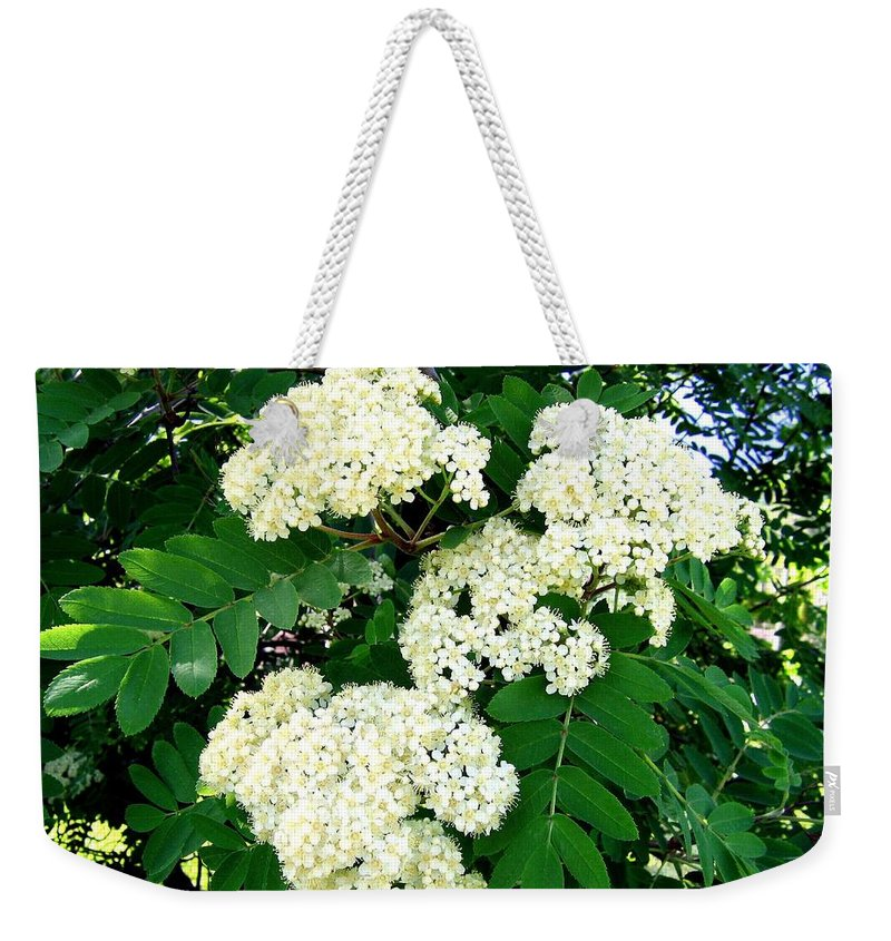 Mountain Ash Weekender Tote Bag featuring the photograph Mountain Ash Blossoms by Will Borden