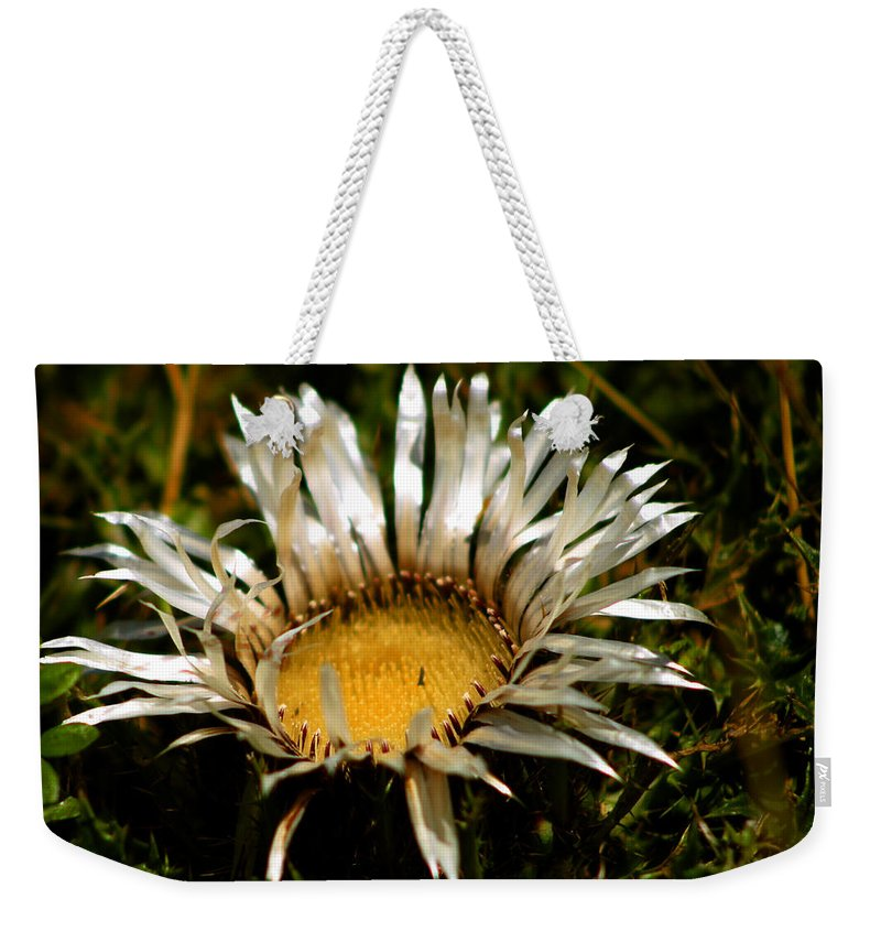 Mountain Weekender Tote Bag featuring the photograph Mountain Thistle French Pyrenees by Dagmar Batyahav
