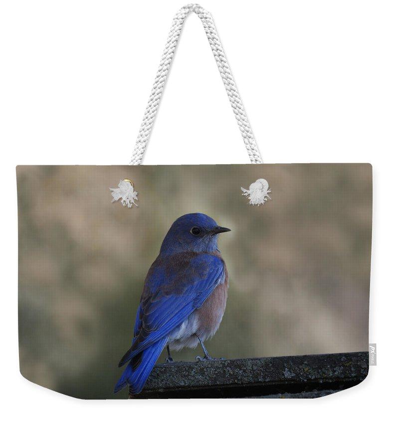 Mountain Bluebirds Weekender Tote Bag featuring the photograph Mountain Bluebird by Ernie Echols