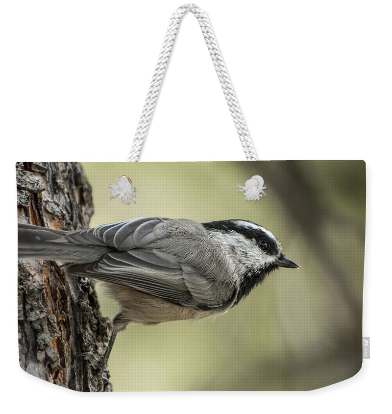 Bird Weekender Tote Bag featuring the photograph Mountain Chickadee by Constance Puttkemery