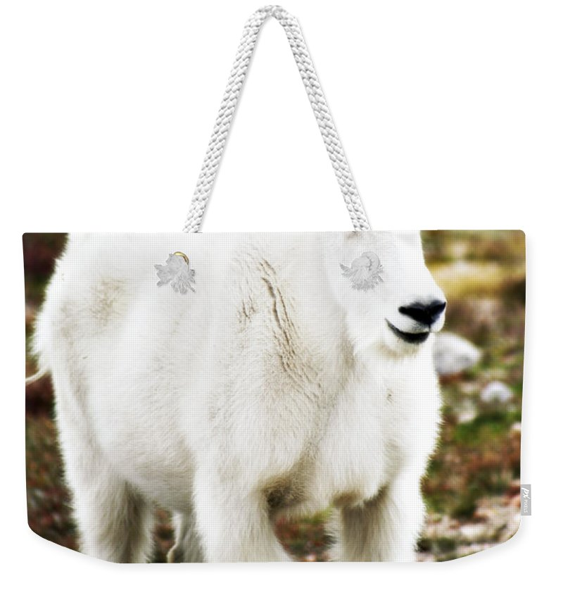 Animal Weekender Tote Bag featuring the photograph Mountain Goat by Marilyn Hunt