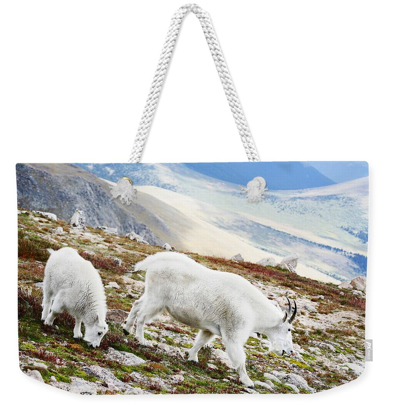 Mountain Weekender Tote Bag featuring the photograph Mountain Goats 1 by Marilyn Hunt