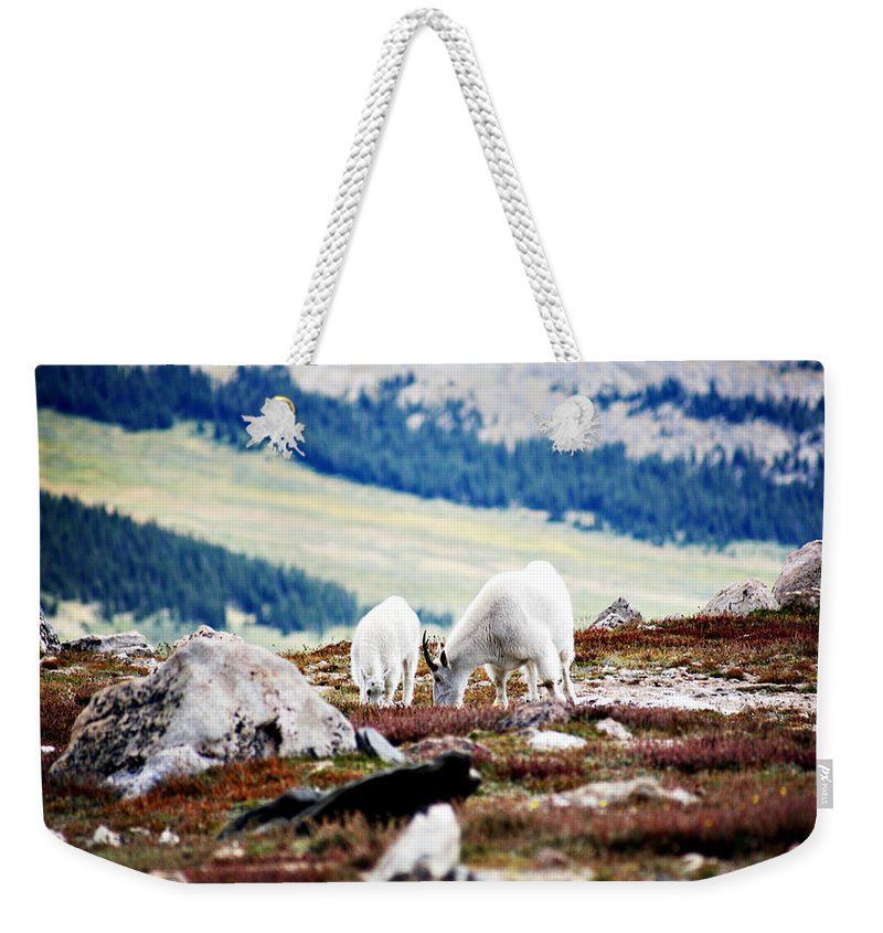 Animal Weekender Tote Bag featuring the photograph Mountain Goats 2 by Marilyn Hunt