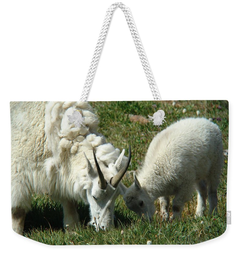 Goats Weekender Tote Bag featuring the photograph Mountain Goats by Carol Milisen