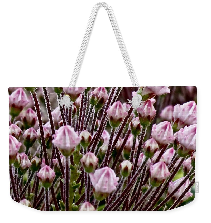 Flowers Weekender Tote Bag featuring the photograph Mountain Laurel Bush by Carol F Austin