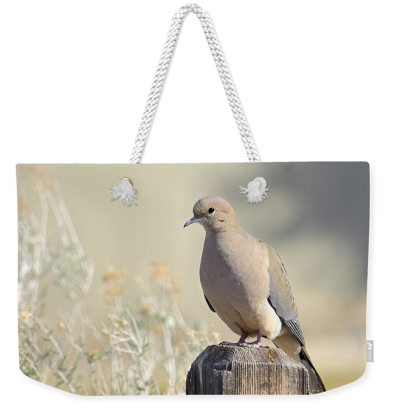 Animal Weekender Tote Bag featuring the photograph Mourning Dove by Marv Vandehey