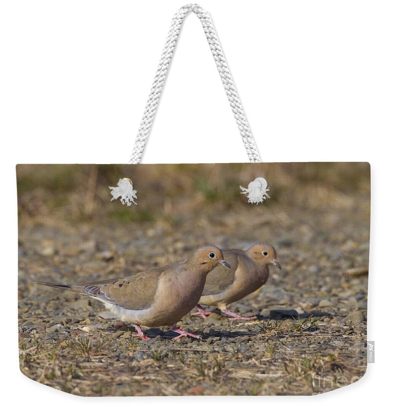 Mourning Dove Weekender Tote Bag featuring the photograph Mourning Dove Pair by Marie Read