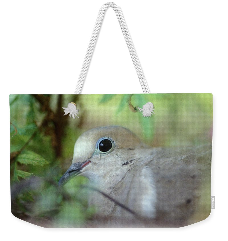 Bird Weekender Tote Bag featuring the photograph Mourning Dove by Yuri Lev