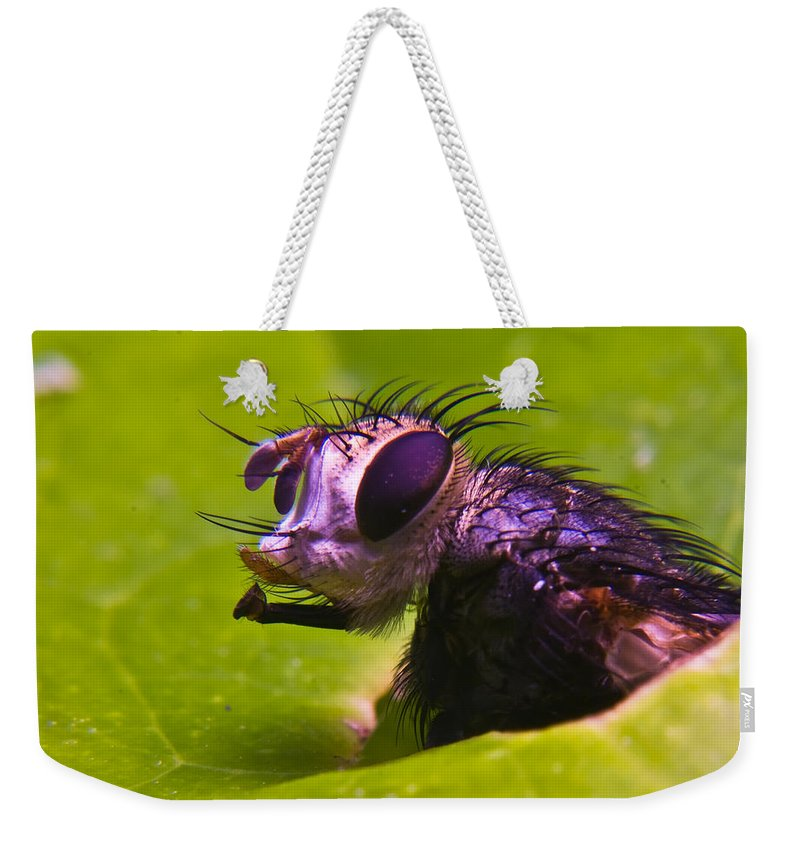 Fly Weekender Tote Bag featuring the photograph Mr. Fly by Douglas Barnett