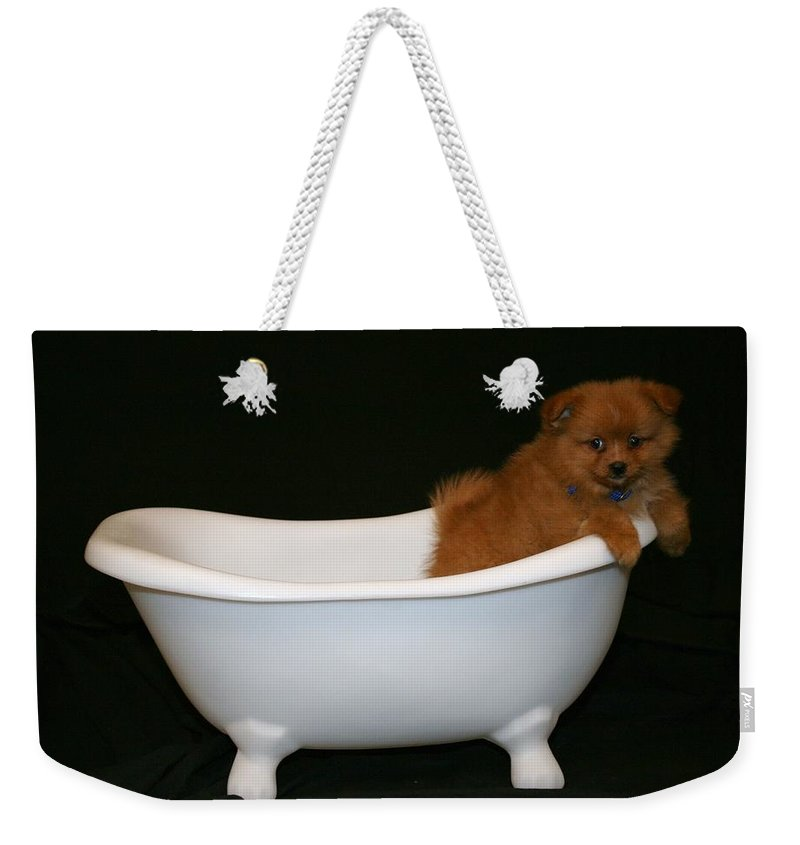 Puppy Weekender Tote Bag featuring the photograph Mr. Fox by Tina Meador