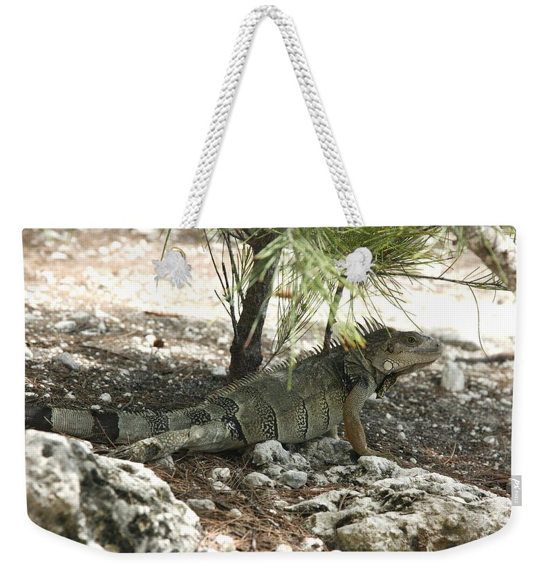 Tropical Weekender Tote Bag featuring the photograph Mr. Green by Gina Fitzhugh