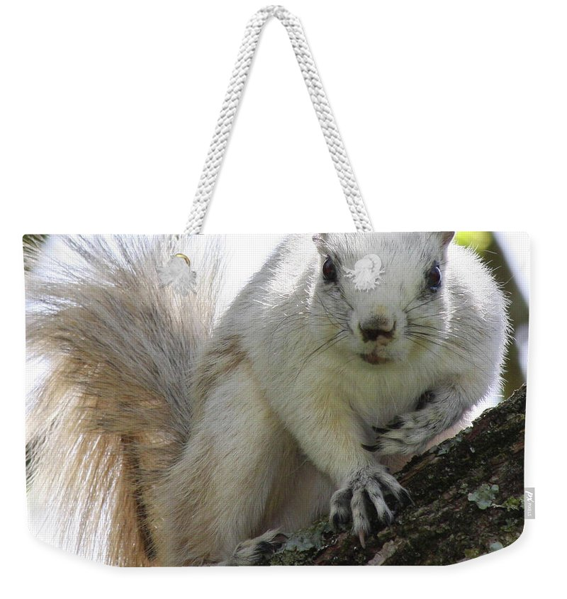 Squirrel Weekender Tote Bag featuring the photograph Mr. Inquisitive II by Betsy Knapp