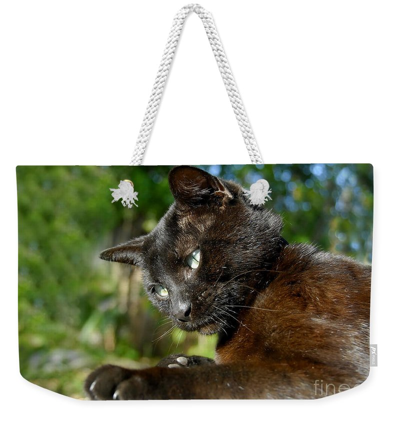 Cat Weekender Tote Bag featuring the photograph Mr. Night by David Lee Thompson