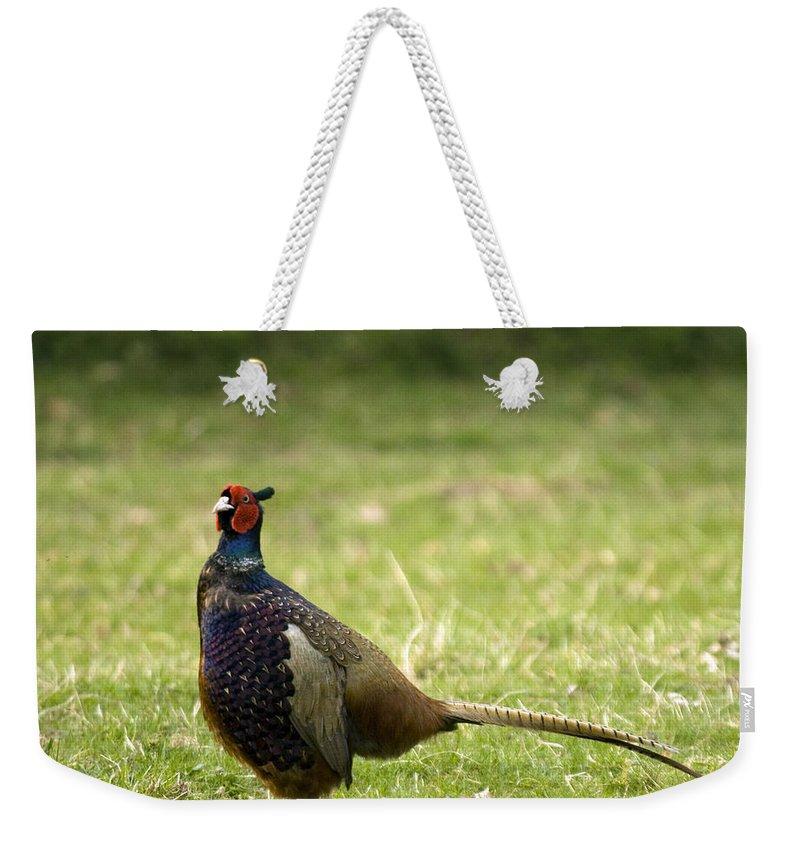 Pheasant Weekender Tote Bag featuring the photograph Mr Pheasant by Angel Ciesniarska
