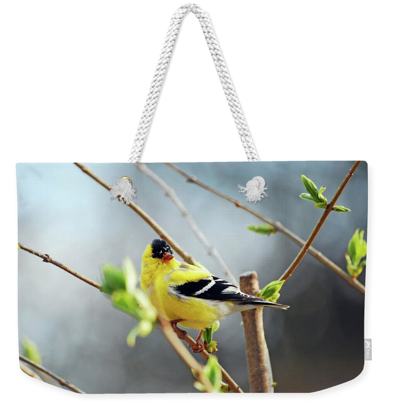 Finch Weekender Tote Bag featuring the photograph Mr. Sunshine by Lori Tambakis